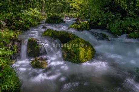 奥入瀬渓流(Oirase River) 日本 青森県 十和田市の写真素材 [FYI03390316]