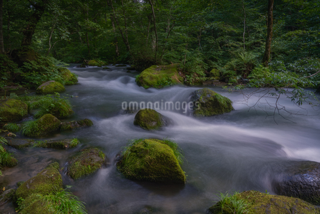奥入瀬渓流(Oirase River) 日本 青森県 十和田市の写真素材 [FYI03390318]