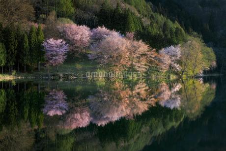 中綱湖 日本 長野県 大町市の写真素材 [FYI03390325]