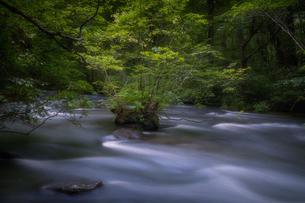 奥入瀬渓流(Oirase River) 日本 青森県 十和田市の写真素材 [FYI03390376]