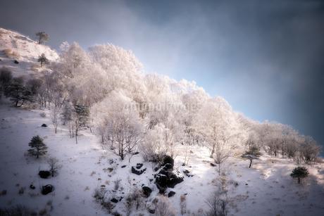 霧ヶ峰 の写真素材 [FYI03390390]