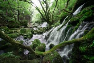 元滝伏流水 日本 秋田県 にかほ市の写真素材 [FYI03390456]