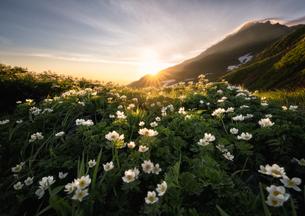 鳥海山 日本 山形県 遊佐町の写真素材 [FYI03390465]