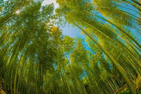 京都・嵐山の竹林の写真素材 [FYI03390749]