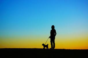 夕暮れの丘で犬の散歩をしている人の写真素材 [FYI03390832]