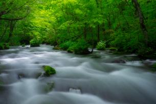 奥入瀬渓流(Oirase River) 日本 青森県 十和田市の写真素材 [FYI03390960]