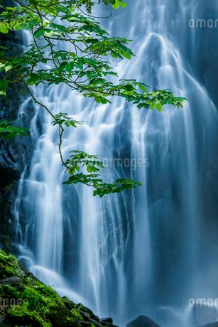 小野川不動滝 日本 福島県 北塩原村の写真素材 [FYI03390963]