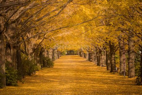 国営昭和記念公園 日本 東京都 立川市の写真素材 [FYI03390980]