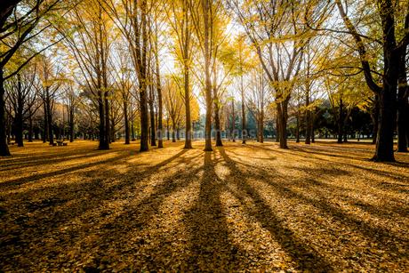 代々木公園 日本 東京都 渋谷区の写真素材 [FYI03390981]