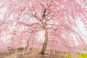 鈴鹿の森庭園 日本 三重県 鈴鹿市の写真素材 [FYI03390999]