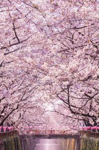 目黒川 日本 東京都 目黒区の写真素材 [FYI03391000]