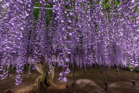 風景 日本の写真素材 [FYI03391005]