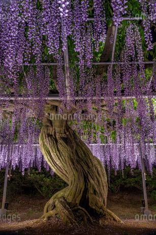 風景 日本の写真素材 [FYI03391007]