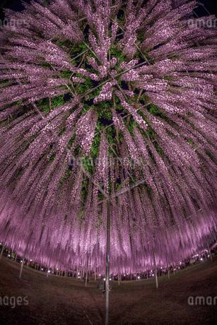 風景 日本の写真素材 [FYI03391011]