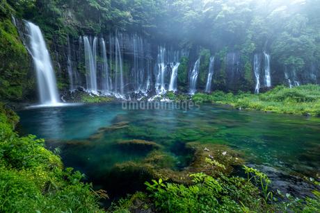 白糸の滝 日本 静岡県 富士宮市の写真素材 [FYI03391037]