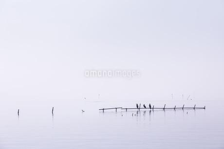 霞ヶ浦 日本 茨城県 阿見町の写真素材 [FYI03391058]