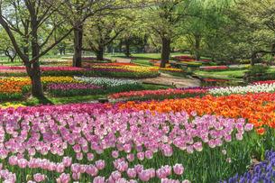 昭和記念公園 日本 東京都 昭島市の写真素材 [FYI03391073]
