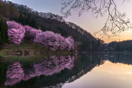 中綱湖 日本 長野県 大町市の写真素材 [FYI03391074]