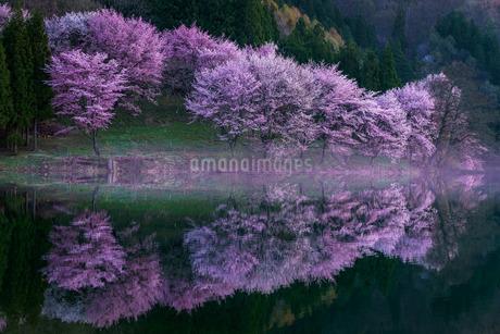 中綱湖 日本 長野県 大町市の写真素材 [FYI03391075]