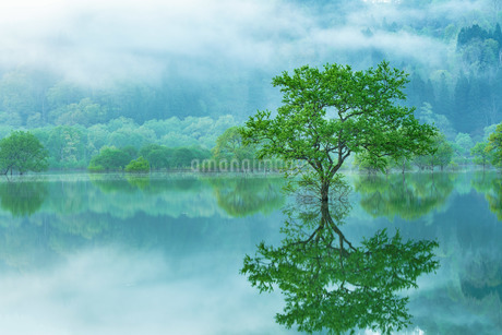 白川ダム湖岸公園 日本 山形県 飯豊町の写真素材 [FYI03391078]
