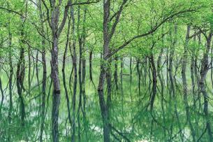 白川ダム湖岸公園 日本 山形県 飯豊町の写真素材 [FYI03391079]