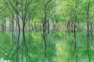 白川ダム湖岸公園 日本 山形県 飯豊町の写真素材 [FYI03391080]