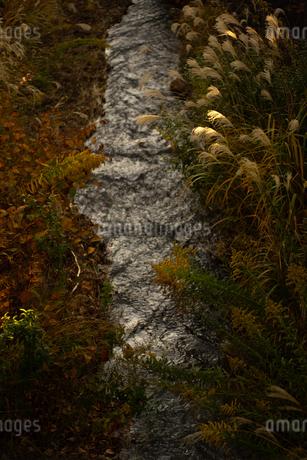 秋の夕暮れの小川の写真素材 [FYI03391133]