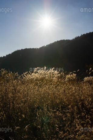 秋の夕暮れの写真素材 [FYI03391135]