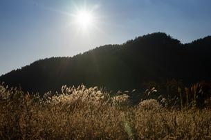 秋の夕暮れの写真素材 [FYI03391136]
