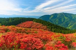 野生の花の写真素材 [FYI03391451]