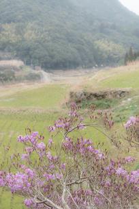 入来町 内之尾の棚田 日本 鹿児島県 薩摩川内市の写真素材 [FYI03391597]