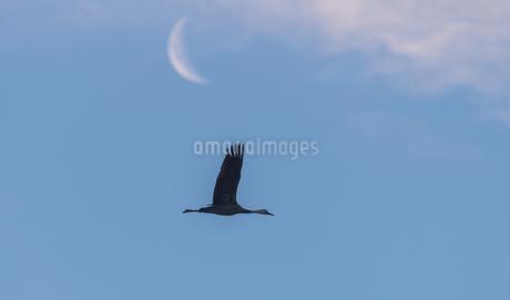 海鳥の写真素材 [FYI03391664]