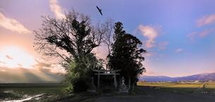 鎮守の杜 日本 滋賀県 高島市の写真素材 [FYI03391845]