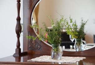 鏡台に飾られた観葉植物の写真素材 [FYI03391860]