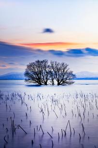 琵琶湖  日本 滋賀県 長浜市の写真素材 [FYI03391868]