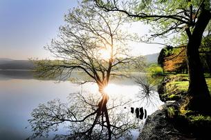 新緑の余呉湖 日本 滋賀県 長浜市の写真素材 [FYI03391901]