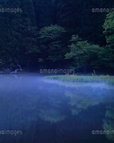 平池 日本 滋賀県 高島市 今津町 の写真素材 [FYI03391907]