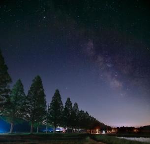 メタセコイア並木 日本 滋賀県 高島市 マキノ町の写真素材 [FYI03391910]