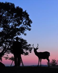 若草山の鹿 日本 奈良県 奈良市の写真素材 [FYI03391966]