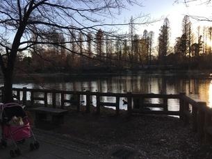 犬のいる公園の写真素材 [FYI03391973]