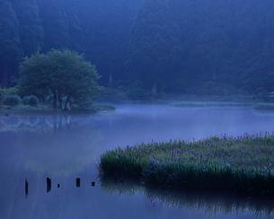 平池 滋賀県 高島市 今津町 日本 の写真素材 [FYI03391989]