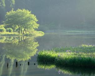 平池 (だいらいけ) 日本の写真素材 [FYI03391991]