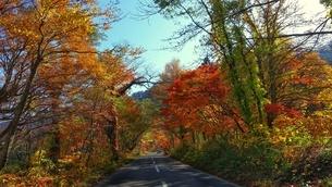 紅葉する十和田湖への道の写真素材 [FYI03392019]