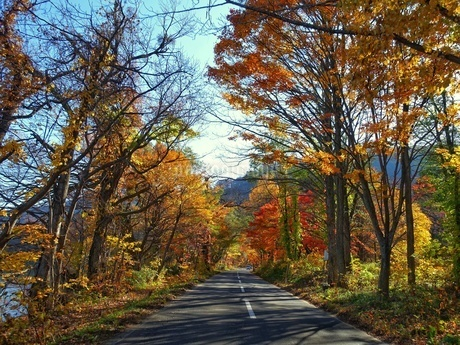 紅葉する十和田湖への道の写真素材 [FYI03392023]