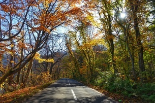 紅葉する十和田湖への道の写真素材 [FYI03392028]