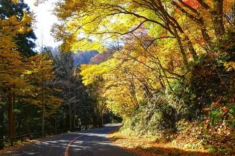 紅葉する十和田湖への道の写真素材 [FYI03392029]