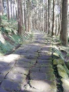 田舎 木漏れ日 森林浴の写真素材 [FYI03392073]