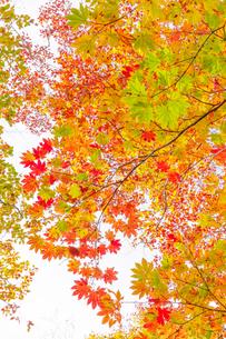 雨飾山 日本 長野県 小谷村の写真素材 [FYI03392113]