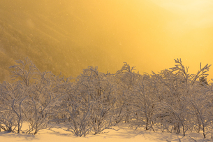 千畳敷カール 日本 長野県 駒ヶ根市の写真素材 [FYI03392120]