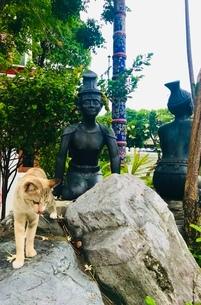 岩に乗るネコと像の写真素材 [FYI03392163]